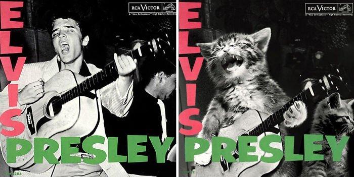 The Kitten Covers или ако музикалните звезди бяха котки. MMTV Online