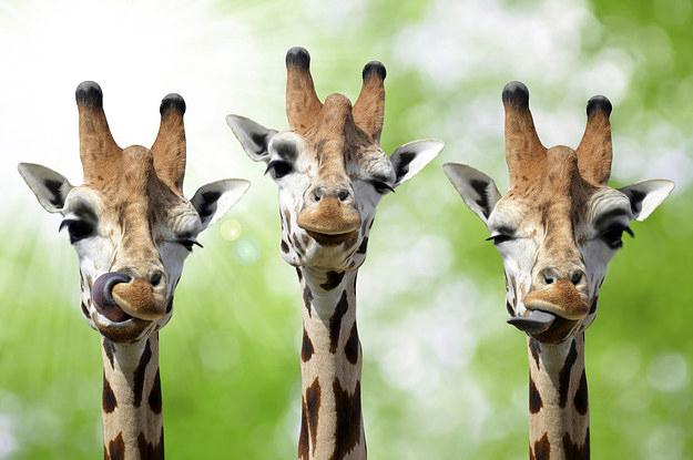 - Мамо, а жирафите имат ли вежди?