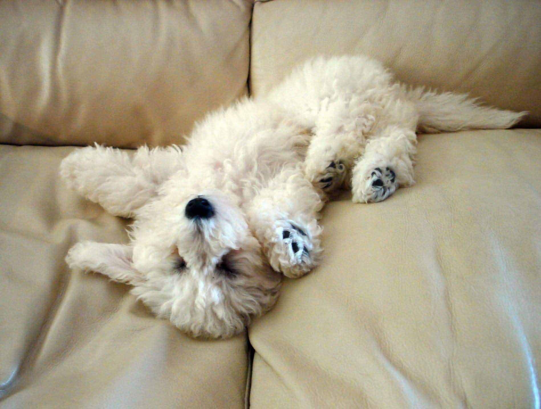 Ако имам късмет и никой не седне на дивана, ще се изтегна там аз и ще потъна в меките му дебри. Ех, колко хубав може да бъде животът!