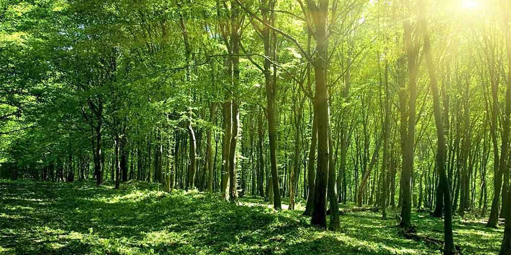 102 хиляди дръвчета бяха засадени в над 70 общини в цяла България
